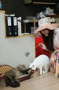 猫カフェです♪