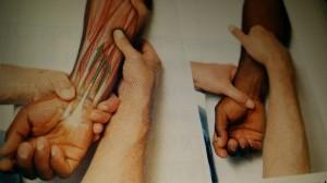 解剖学の学び